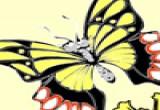 لعبة تلوين الفراشة المرحة عاشقة الازهار